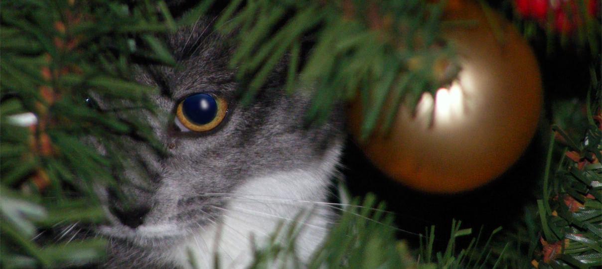 好奇心のある猫